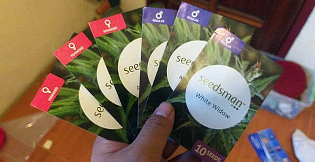 seeds for hydroponics